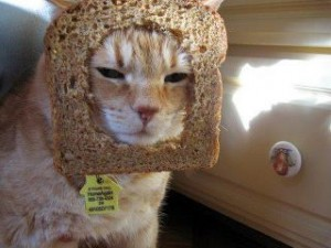 Bread and cat